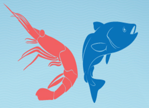 Krill Oil vs Fish Oil- benefits of krill oil