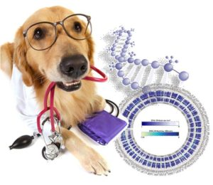 Best Dog DNA Brands