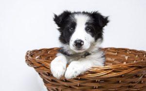 Best Dog DNA Brands in The Market
