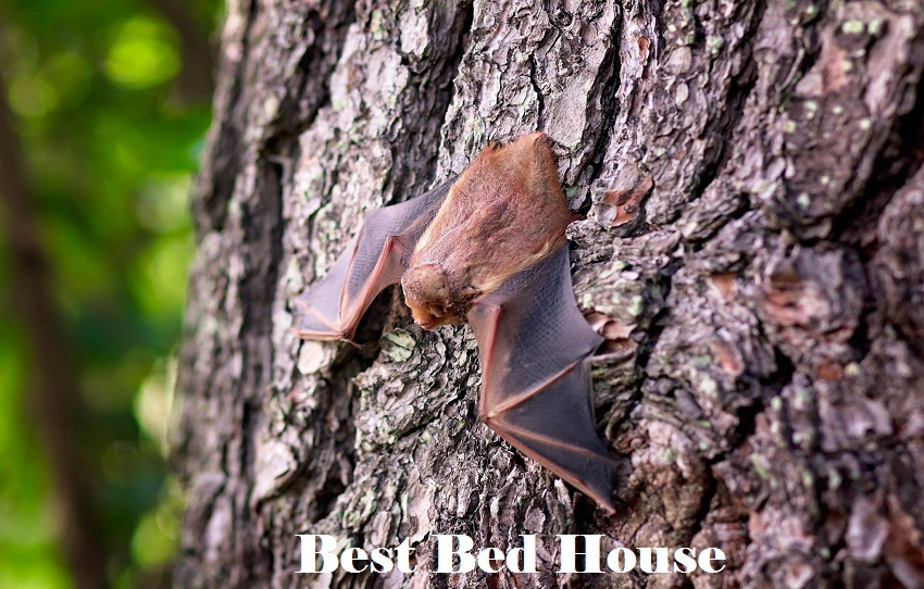 Best bed House